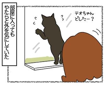 08082017_cat2.jpg