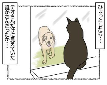 08082017_cat4.jpg