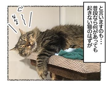 09082017_cat2mini.jpg