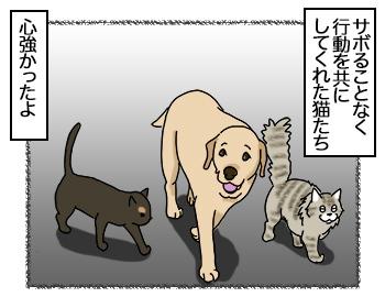 09082017_cat4mini.jpg