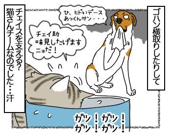 11082017_cat4mini.jpg