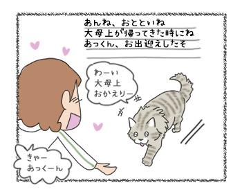 11092017_cat2.jpg