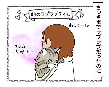 12092017_cat1.jpg