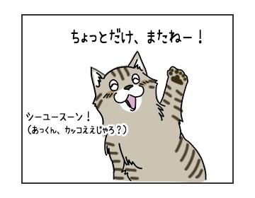 13072017_cat1.jpg