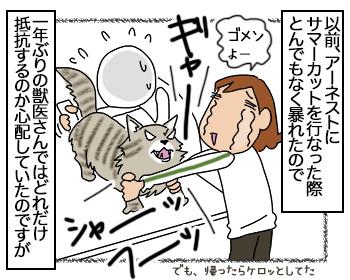 15082017_cat1mini.jpg