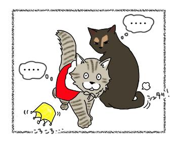18092017_cat3.jpg