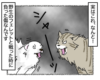 20092017_cat2.jpg