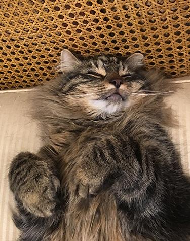 22082017_cat2.jpg