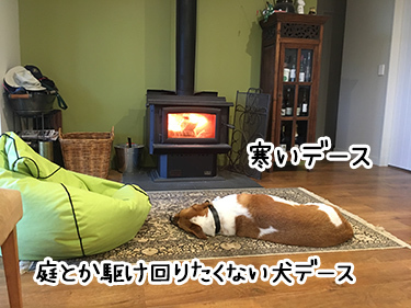 24082017_cat8.jpg