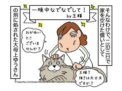 26092017_cat1.jpg