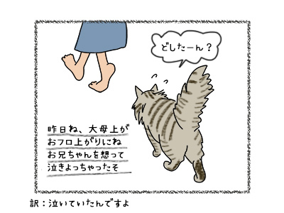 28092017_cat2mini.jpg