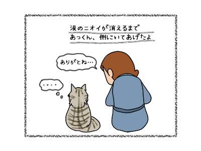 28092017_cat5mini.jpg