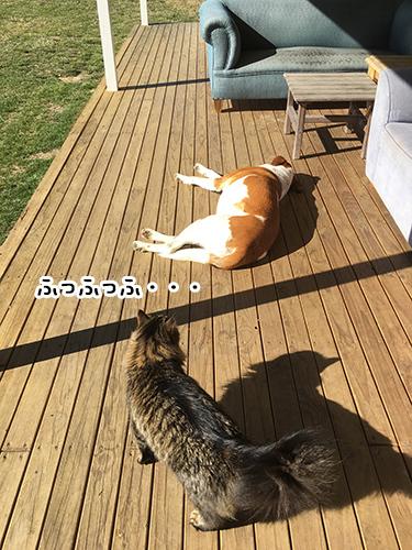 30082017_cat1.jpg