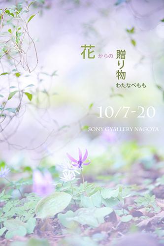 ☆DSC04306-1-1