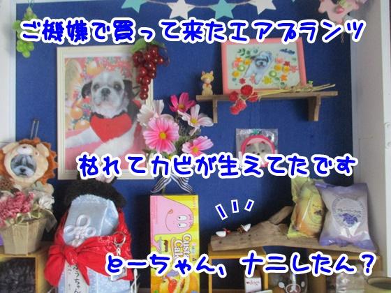 0925-10_201709251538420f1.jpg