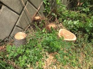 雑木伐採_03