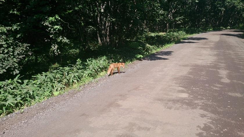 細岡展望台への道
