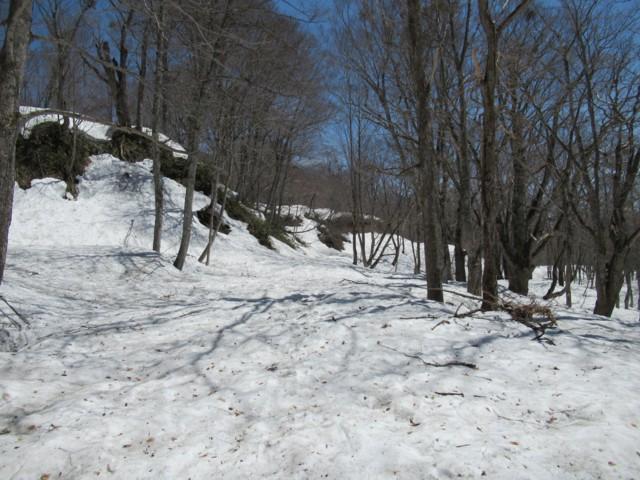 5月4日 林道歩き2.5km