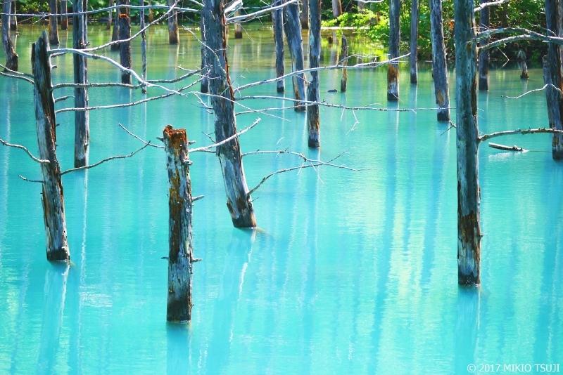 絶景探しの旅 - 0278 ターコイズブルー 「青い池」 (北海道 美瑛町)