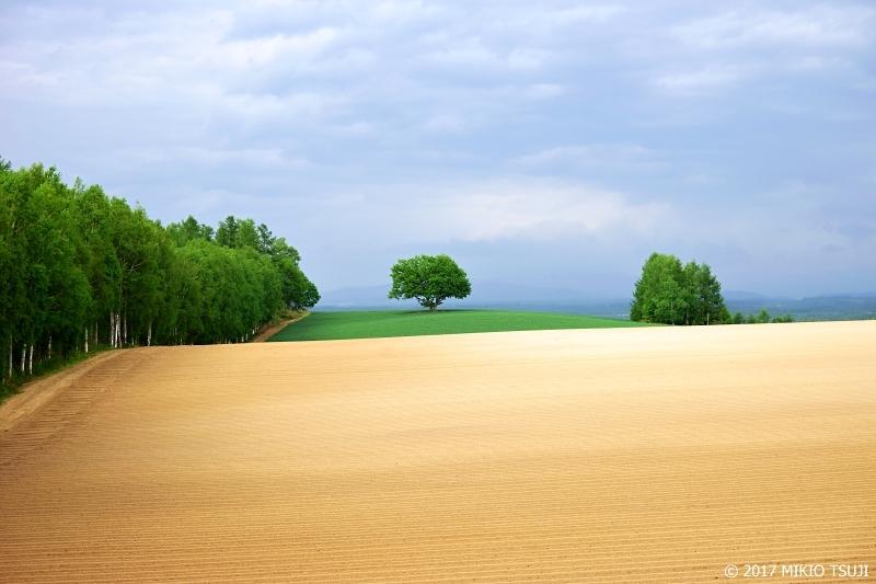 絶景探しの旅 - 0283 丘の四角い木の風景 (北海道 美瑛町)