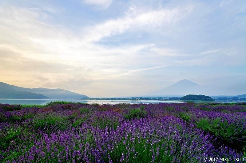 絶景探しの旅  - 0290 ラベンダー畑の夜明け (大石公園/山梨県 富士河口湖町)