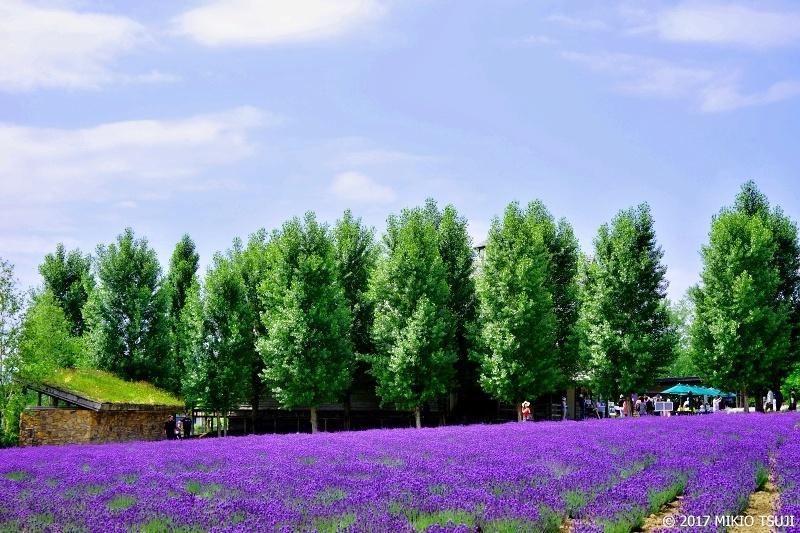 絶景探しの旅 - 0302 ラベンダーの丘 (ファーム富田/北海道 中富良野町)