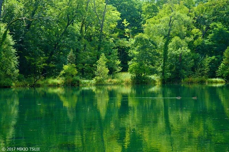 絶景探しの旅 - 0351 エメラルドグリーンの池を泳ぐ (鳥沼公園/ 北海道 富良野市)