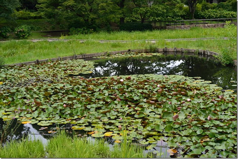 DFN_1854-蓮池